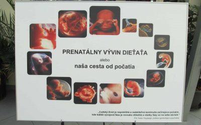 embryo výstava