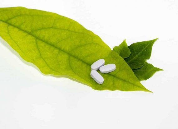 leaf-681122_1280